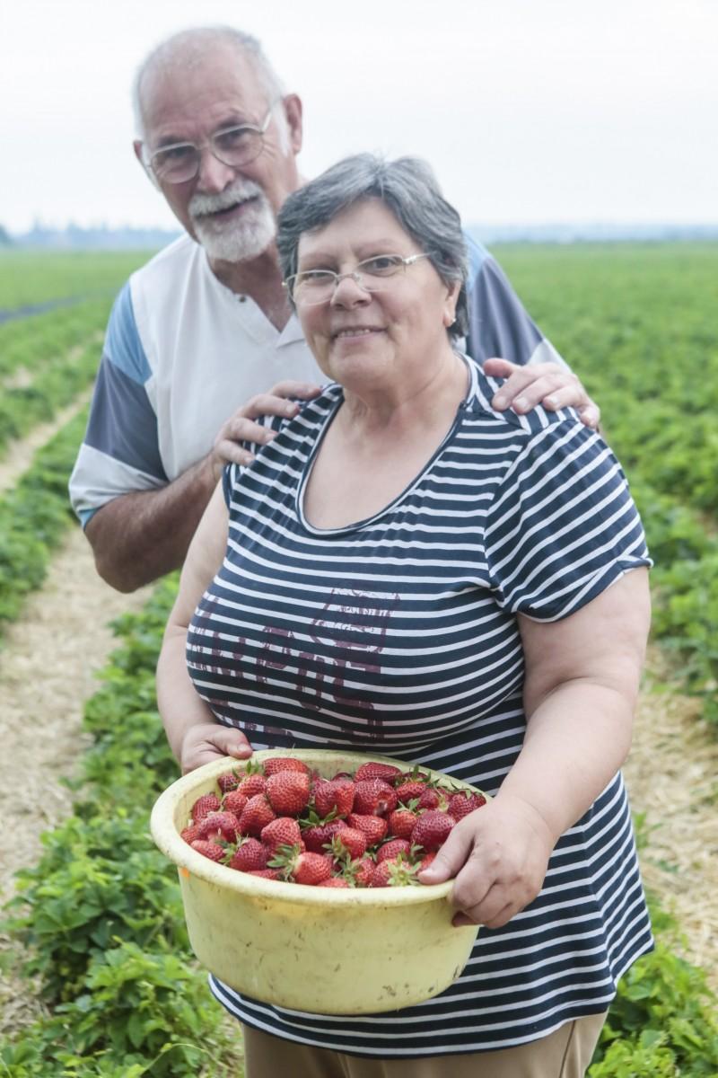lancement-fraises-2016_02.jpg
