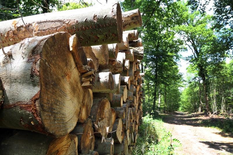Bois - Forêt - 01.jpg
