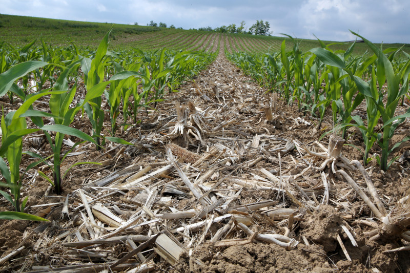 Essais maïs sans labour - 12.jpg