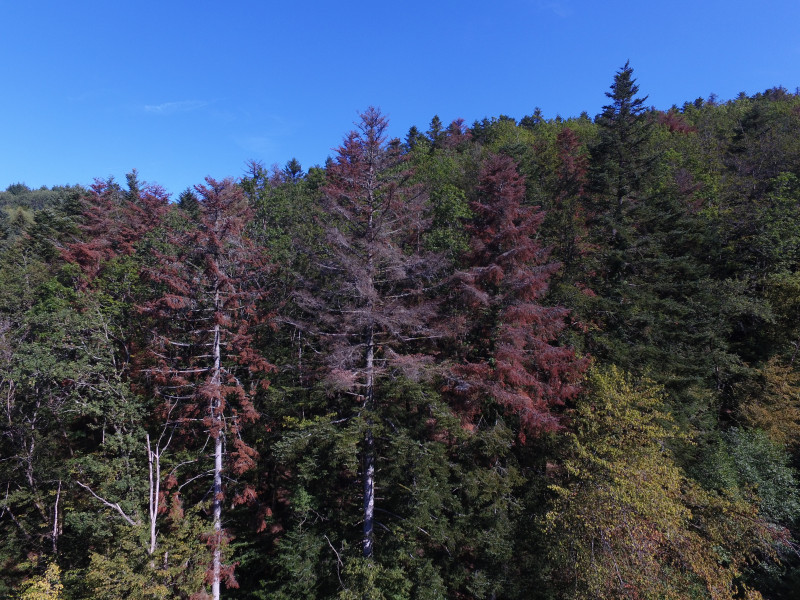 Drone Forêt rouge Masevaux Doller 030919-6.JPG