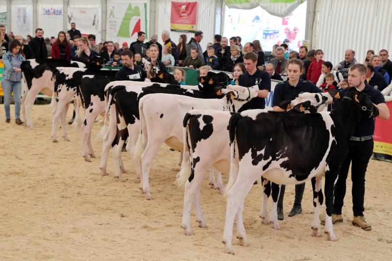Festival de l'élevage 2019 - Concours PrimHolstein - 07.jpg