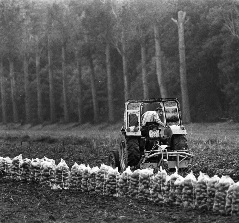 Pommes de terre 4.jpg