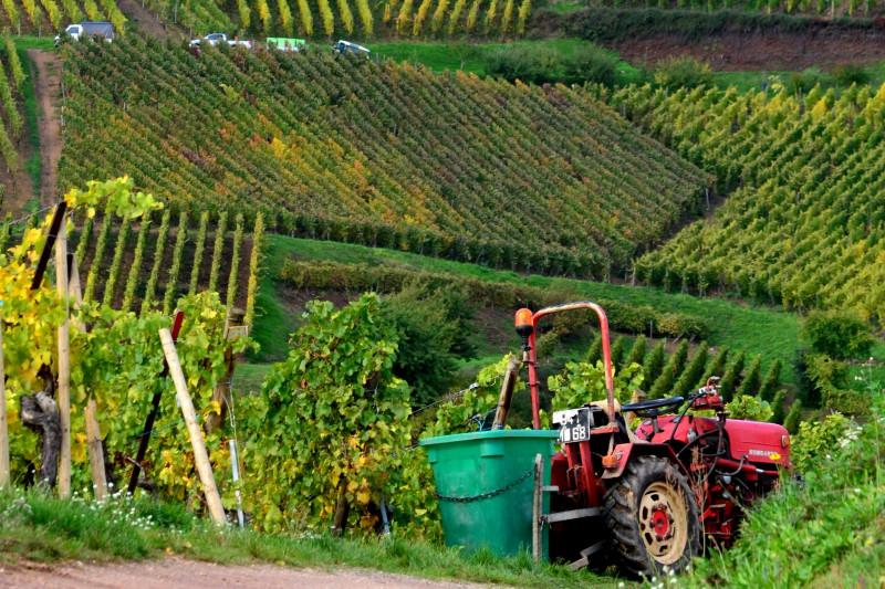 Travaux viti