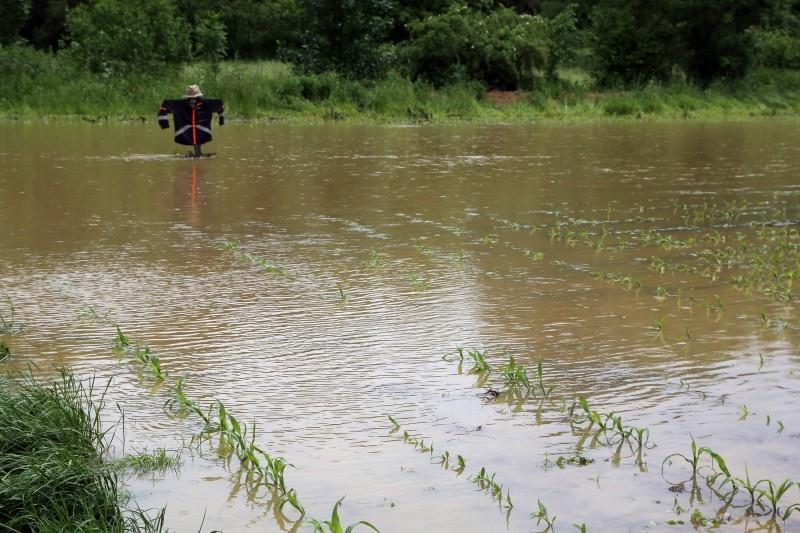Inondations - grêle - Maïs - 01.jpg