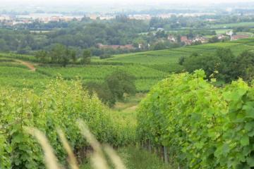 Millésime-Alsace-2018-IMG_3228.JPG