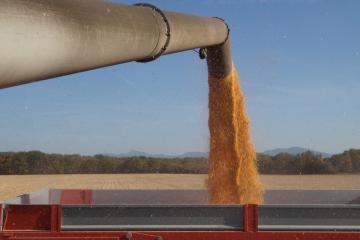 récolte maïs 191017DSC03602.JPG