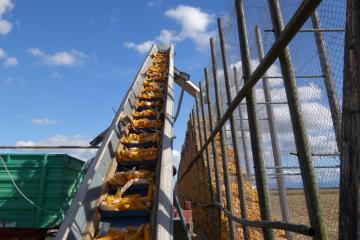 Récolte maïs cribs 031019-3.JPG