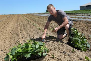 DIemer Thibaut - Plantation patate douce - 01.jpg