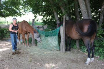 HORSE_5152.JPG